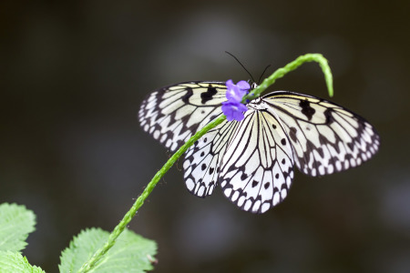 Picture no: 10700331 Schmetterling Created by: Klaus Kehrls