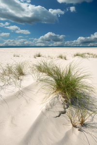 Picture no: 10727699 Nordsee - Insel Amrum Created by: Reiner Würz