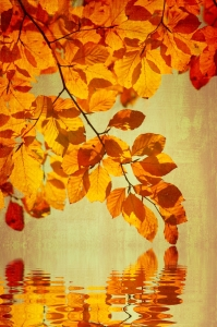 Picture no: 10728513 Herbstfarben Created by: gabii40