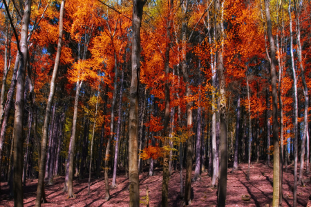 Picture no: 10729467 Autumn Forest Created by: Steffen Gierok
