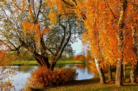 Picture no: 10729487 Herbstlaub Created by: falconer59