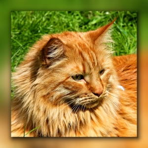 Picture no: 10733255 Kater im Gras Created by: falconer59