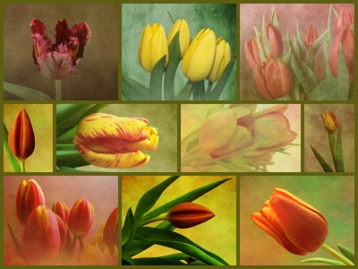 Picture no: 10735051 Tulpen - Collage Created by: Anja Otto