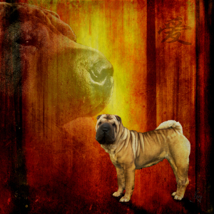 Picture no: 10752677 Chinese Shar Pei Created by: yammay