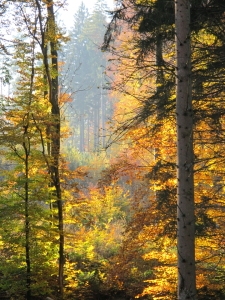 Picture no: 10771223 Herbstwald Created by: MS