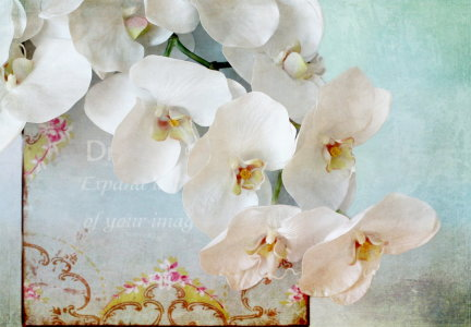 Picture no: 10782719 Orchideenstillleben Created by: Heike Hultsch