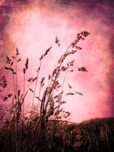 Picture no: 10798357 Pink grasses Created by: yammay