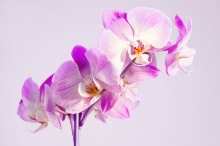 Picture no: 10865356 Orchideen Created by: Steffen Gierok