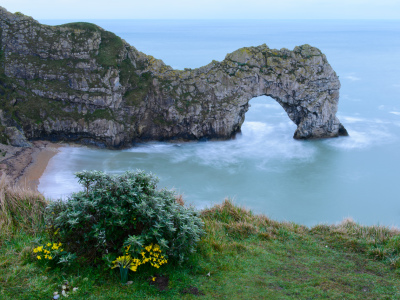 Picture no: 10872534 Flowers at Durdle Door Created by: DenisFeiner