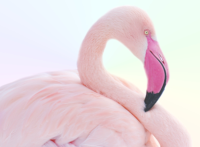 Picture no: 10886578 Flamingo  Created by: Heike Hultsch