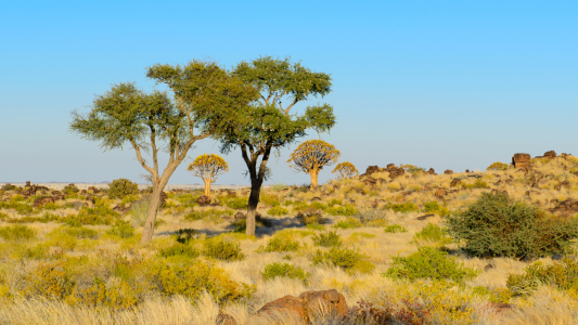 Picture no: 10886788 Trees of Namibia Created by: DenisFeiner