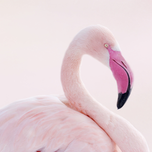 Picture no: 10893400 Flamingo Created by: Heike Hultsch