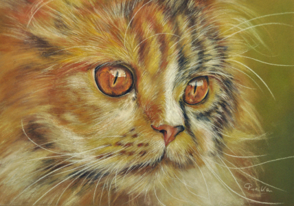 Picture no: 10920045 Perserkatze Created by: Frenken-Art