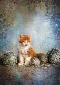Picture no: 10950379 knitting kitten. Created by: René de Brunn