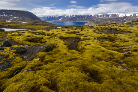Picture no: 10962133 Islands Westfjorde Created by: DenisFeiner