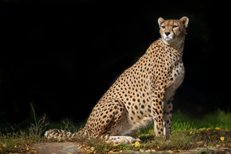 Picture no: 10973194 Cheetah Created by: Thomas Herzog