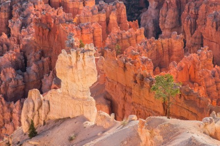 Picture no: 10977828 Bryce Canyon Created by: TomKli