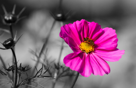 Picture no: 11023297 Pink Flower Created by: Ursula  Di Chito