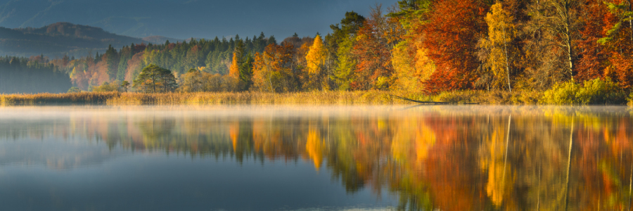 Picture no: 11076149 COLORS OF FALL Created by: DenisFeiner