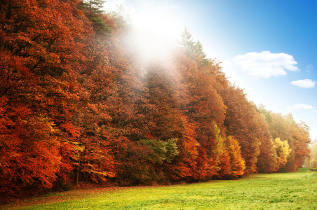 Picture no: 11077451 Herbstlandschaft Created by: spima