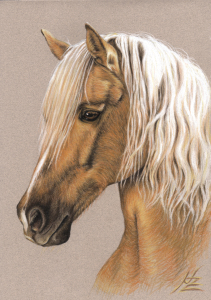 Picture no: 11098807 Berber Pferd - Spanish Horse Created by: NicoleZeug