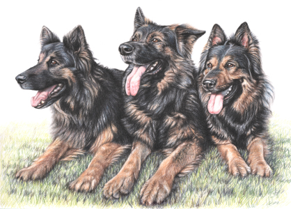 Picture no: 11116095 Schäferhunde - German Shepherds Created by: NicoleZeug
