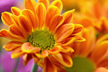Picture no: 11129740 Herbstblumen Created by: Atteloi