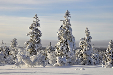 Picture no: 11131554 Winter in Finnland Created by: GUGIGEI