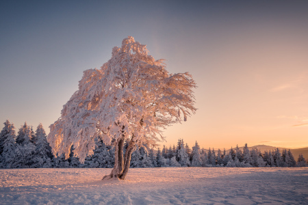 Picture no: 11134352 Winterlicht Created by: Andreas Wonisch