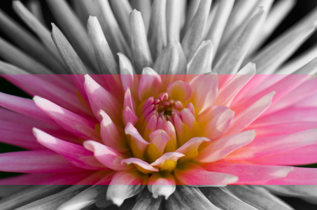 Picture no: 11193198 Dahlia Created by: Steffen Gierok