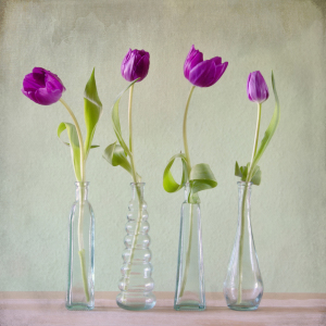 Picture no: 11209660 Purple Tulips Created by: Steffen Gierok