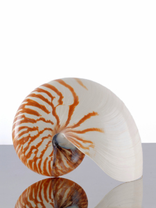 Picture no: 11213696 Nautilus Created by: Rolf Eschbach
