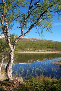 Picture no: 11214712 Dovrefjell Created by: GUGIGEI