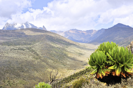 Picture no: 11224320 Tal am Mount Kenia mit Senezie Created by: JF-Fotografie