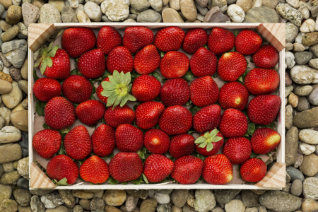 Picture no: 11252906 Strawberries Created by: Thomas Herzog
