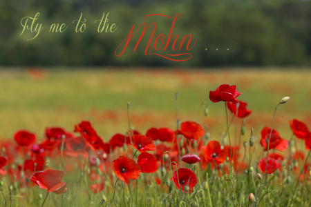 Picture no: 11269498 Fly me to the Mohn Created by: Thomas Herzog