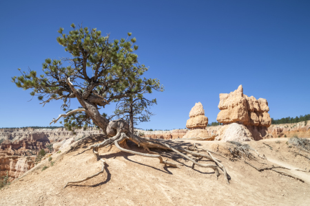 Picture no: 11313748 BRYCE CANYON & Old Tree Created by: Melanie Viola