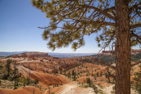 Picture no: 11313762 BRYCE CANYON View Created by: Melanie Viola
