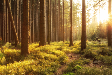 Picture no: 11359418 Abendsonne im Wald Created by: Oliver Henze