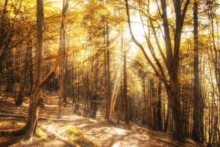 Picture no: 11359730 Goldener Herbstwald Created by: Oliver Henze