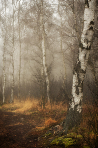 Picture no: 11366505 Mystical Forest Created by: Susann Mielke