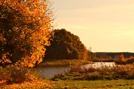 Picture no: 11367085 Herbstlandschaft Created by: SchmidtArt