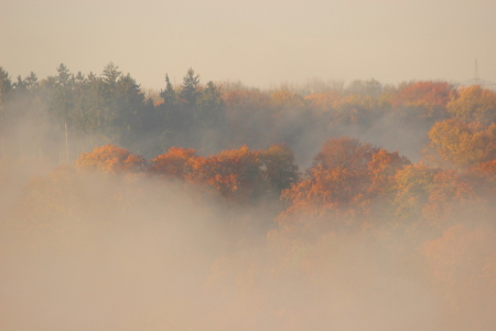 Picture no: 11386219 Herbstnebel Created by: KundenNr-272456