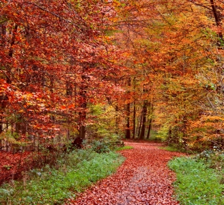 Picture no: 11388665 Herbstwald Created by: Amazone54