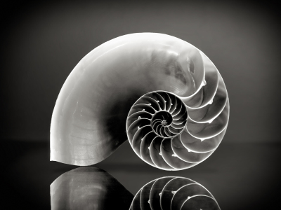 Picture no: 11402325 Nautilus Created by: Rolf Eschbach