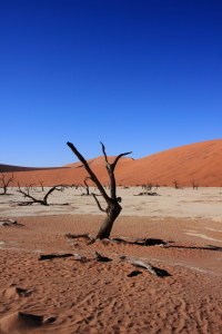 Picture no: 11416466 Death Vlei Created by: k-habermann