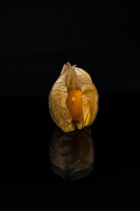 Picture no: 11425299 Physalis 4 Created by: Erhard Hess