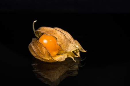 Picture no: 11425809 Physalis 7 Created by: Erhard Hess