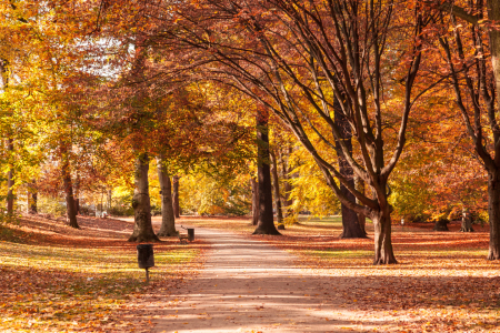 Picture no: 11428450 Herbstpark Created by: SP10