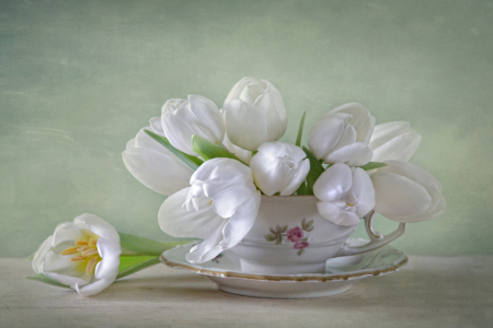Picture no: 11434950 White Tulips Created by: Steffen Gierok